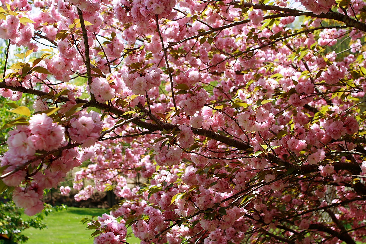 west virginia - Pink Trees