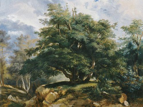 Chêne de Fontainebleau par Coignet