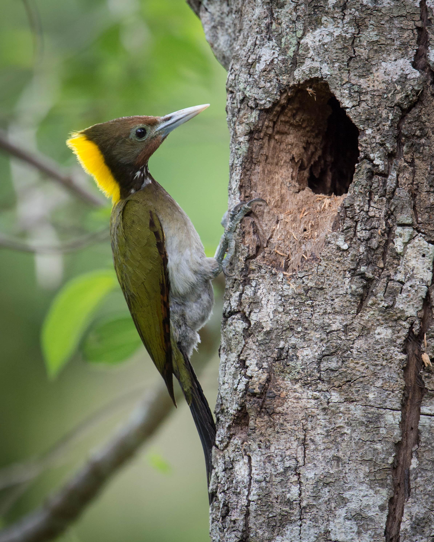 how to stop woodpeckers reddit