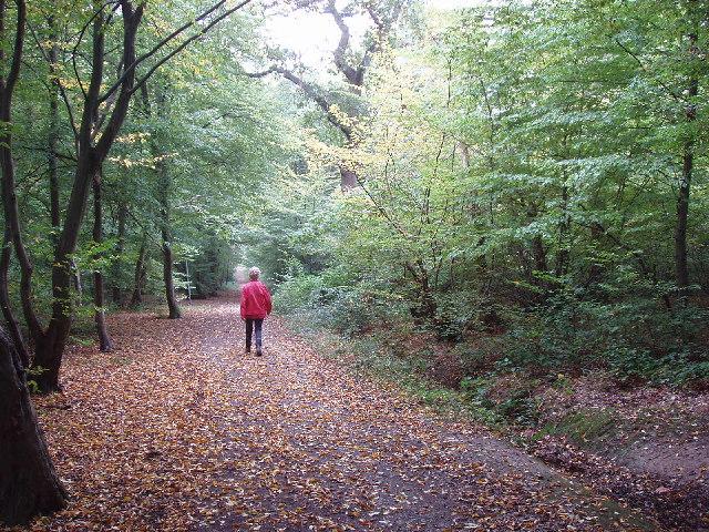 Hillingdon Trail in Mad Bess Wood, Ruislip - geograph.org.uk - 62479