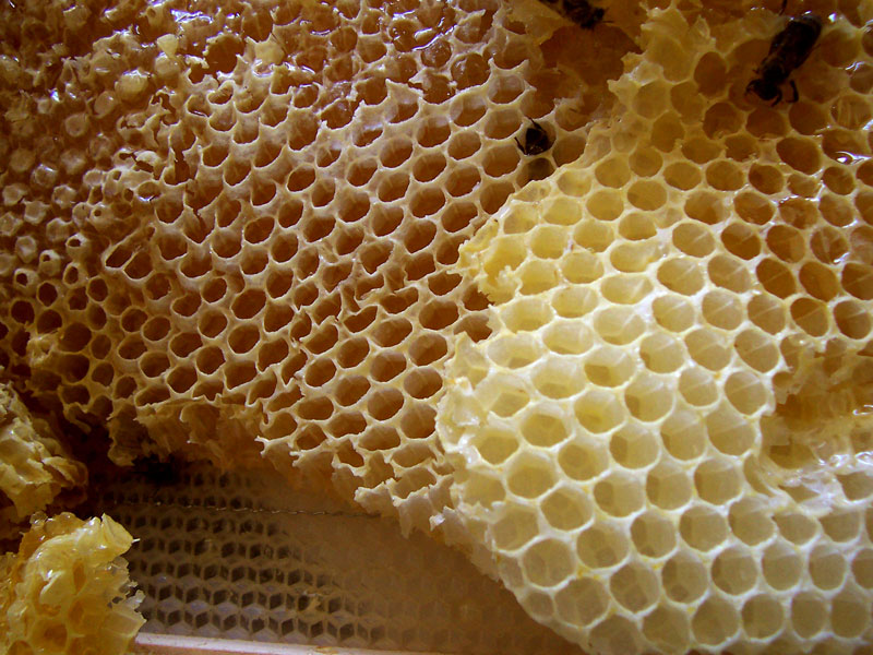 File:Honey comb.jpg