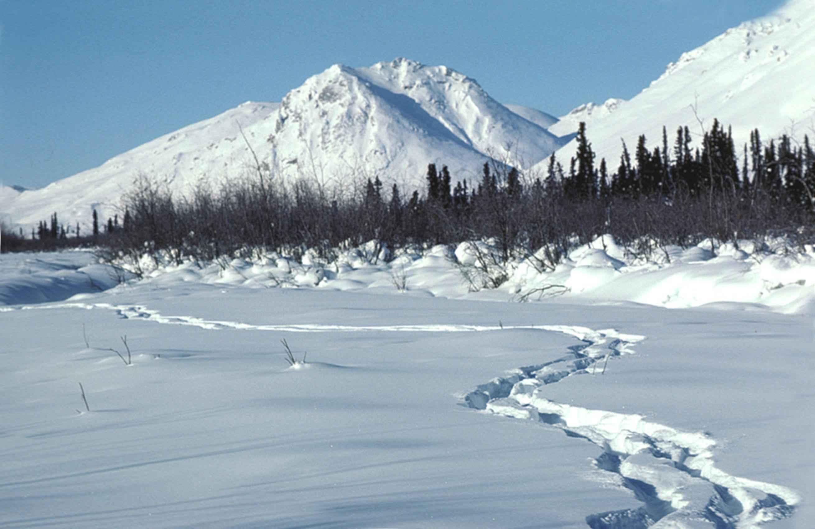 Human Nature Winter Wonderland
