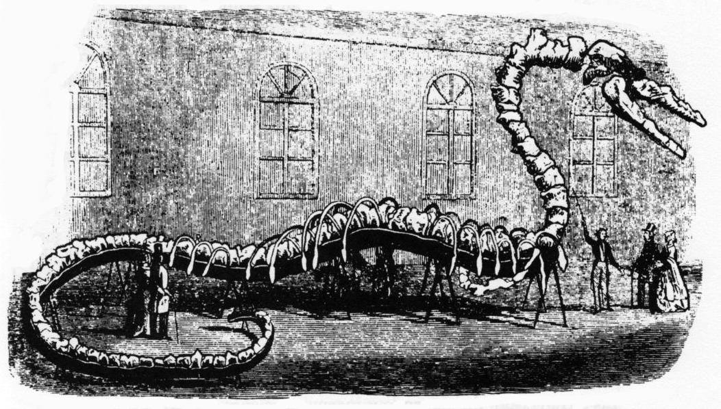 Resultado de imagen de gran esqueleto del Hydrarchos