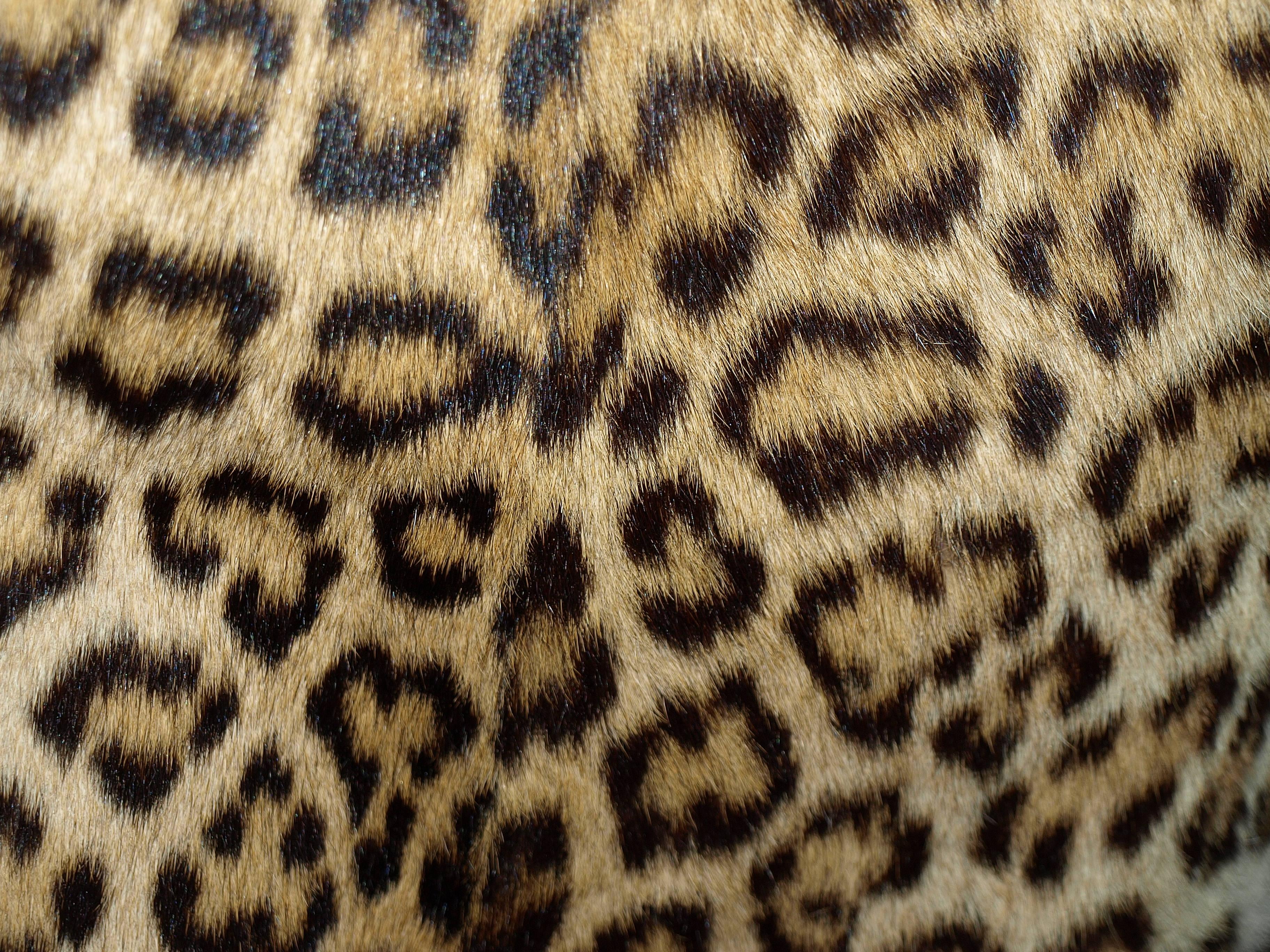 leopard pattern 2 print - photo #29