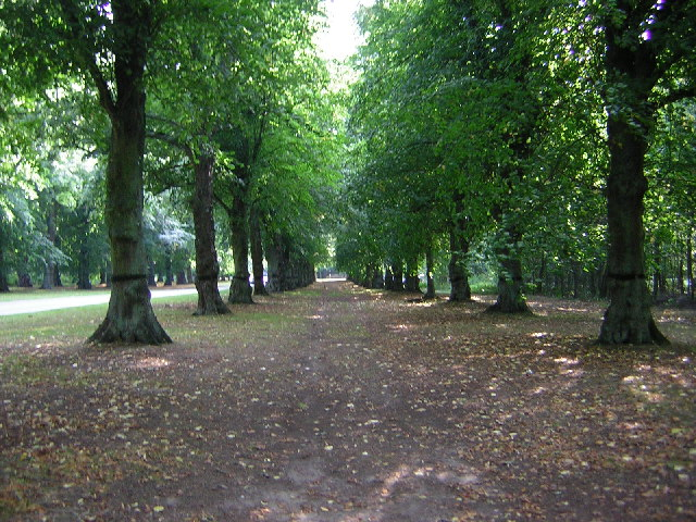 Lime Avenue, Clumber Park - geograph.org.uk - 53357