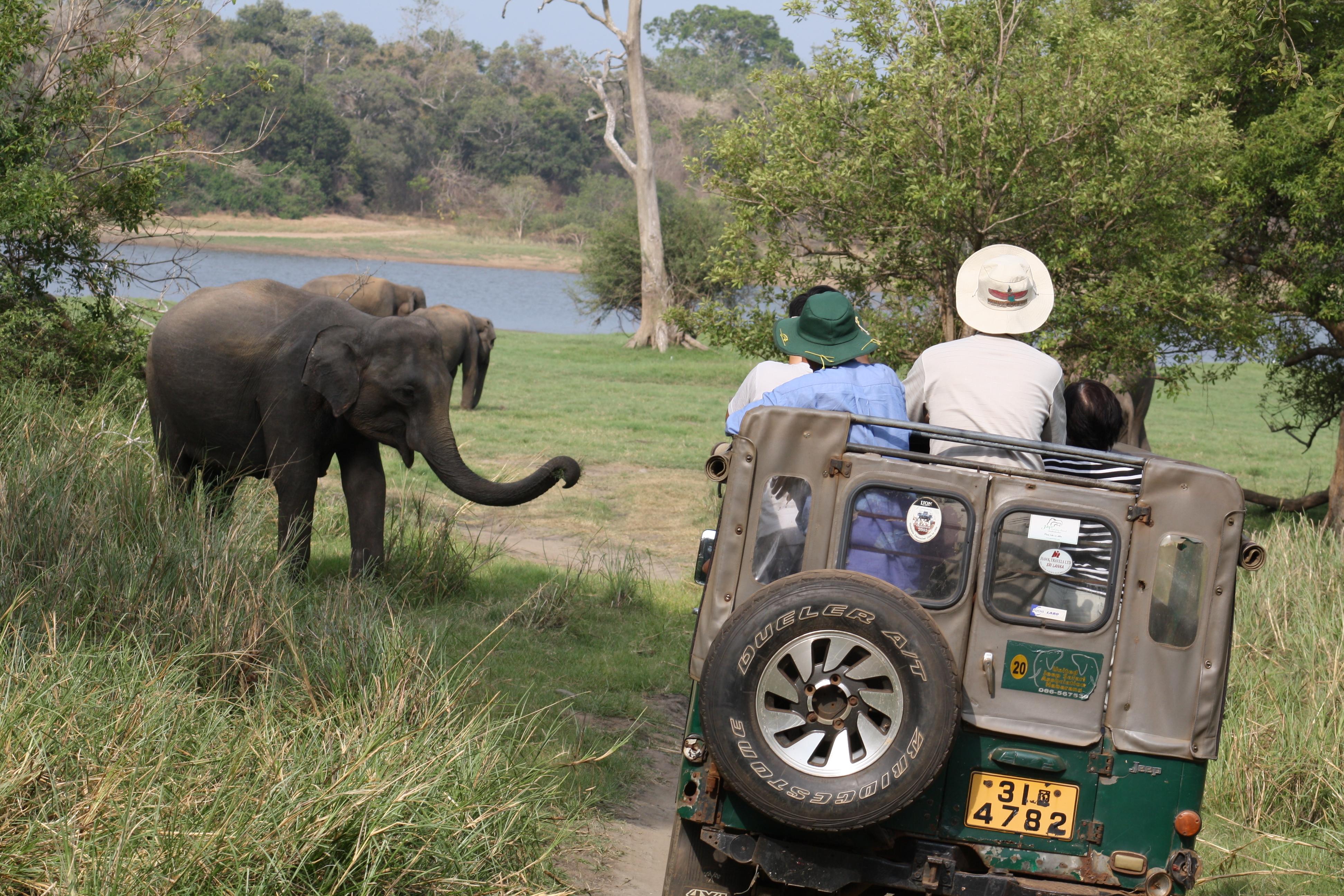 Dubai Safari Park Ride