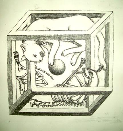 File:Paradoja de el gato de Schrödinger.jpg