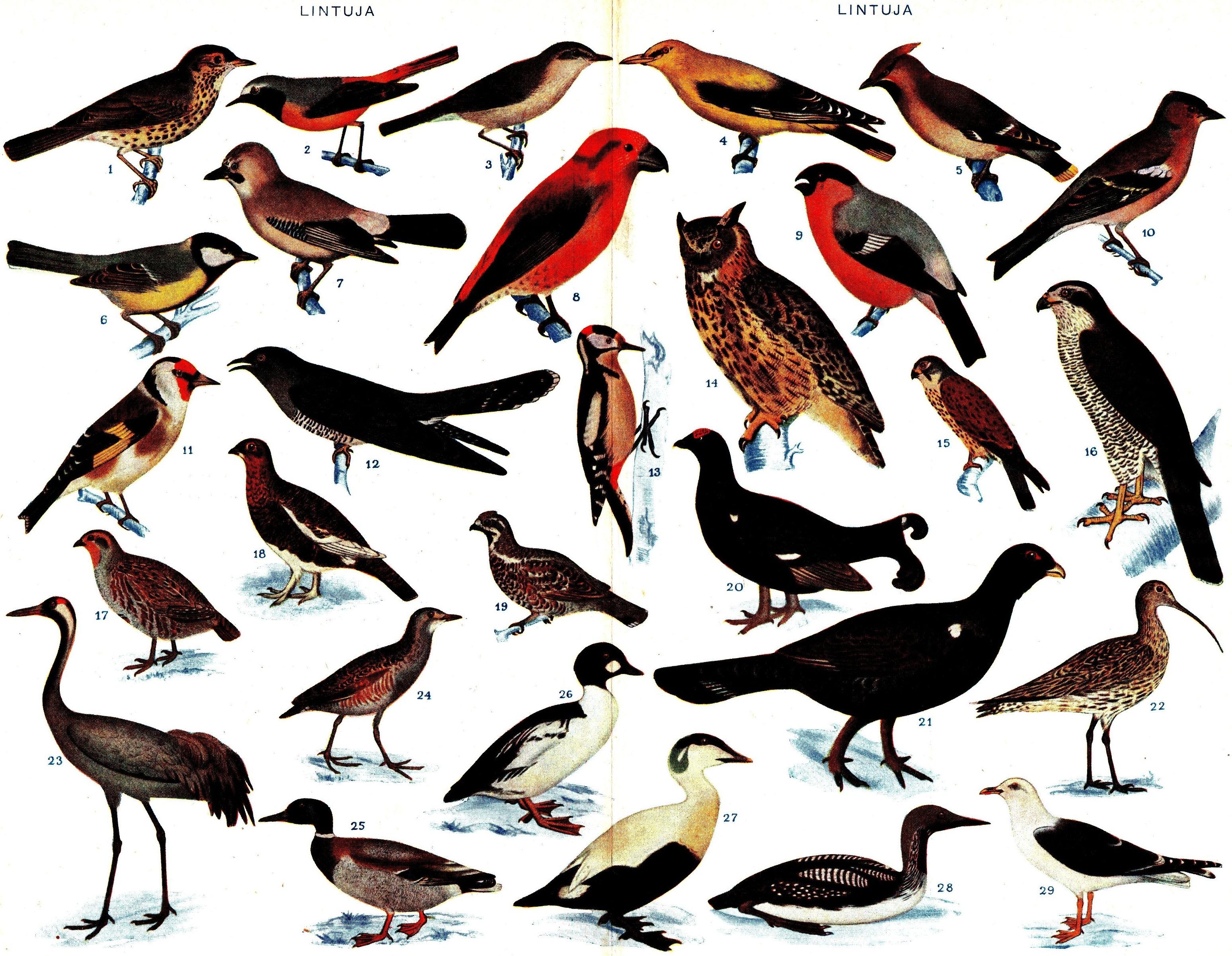 Biodiversidad De Brasil Wikipedia La Enciclopedia Libre