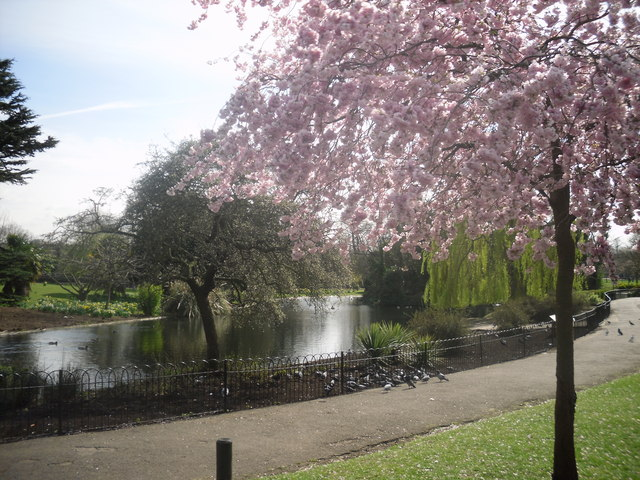 Pink blossoms in Ravenscourt Park - geograph.org.uk - 1231550