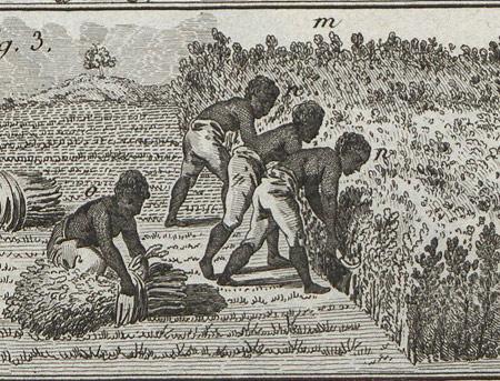 plantation coloniale sur l 39 le bourbon pr s de madagascar thinglink. Black Bedroom Furniture Sets. Home Design Ideas