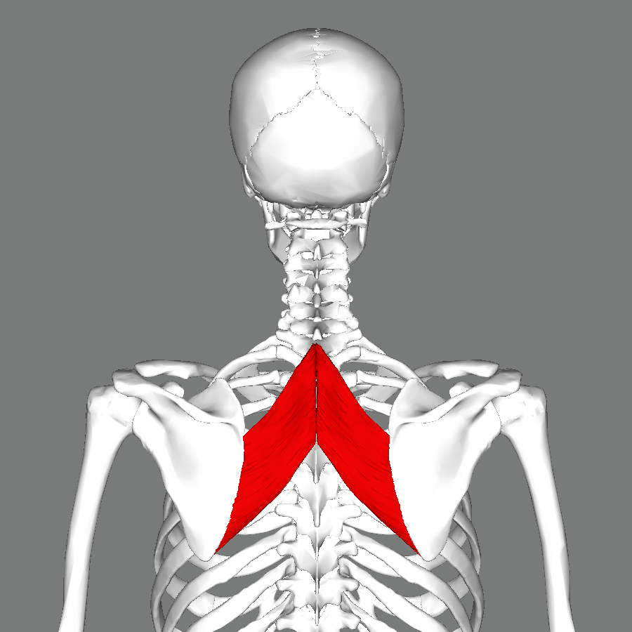 Image result for rhomboids
