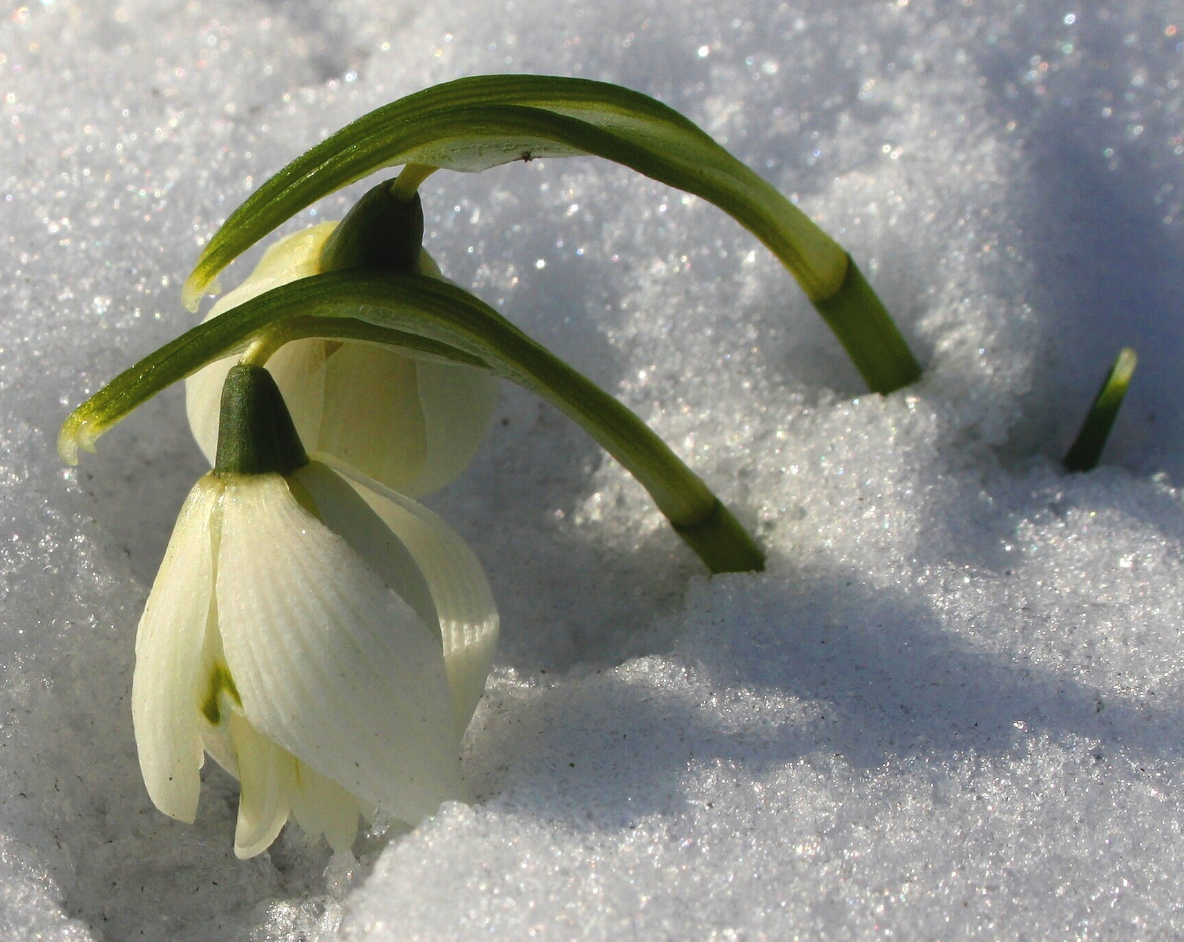 Картинки падающий снег на рабочий стол