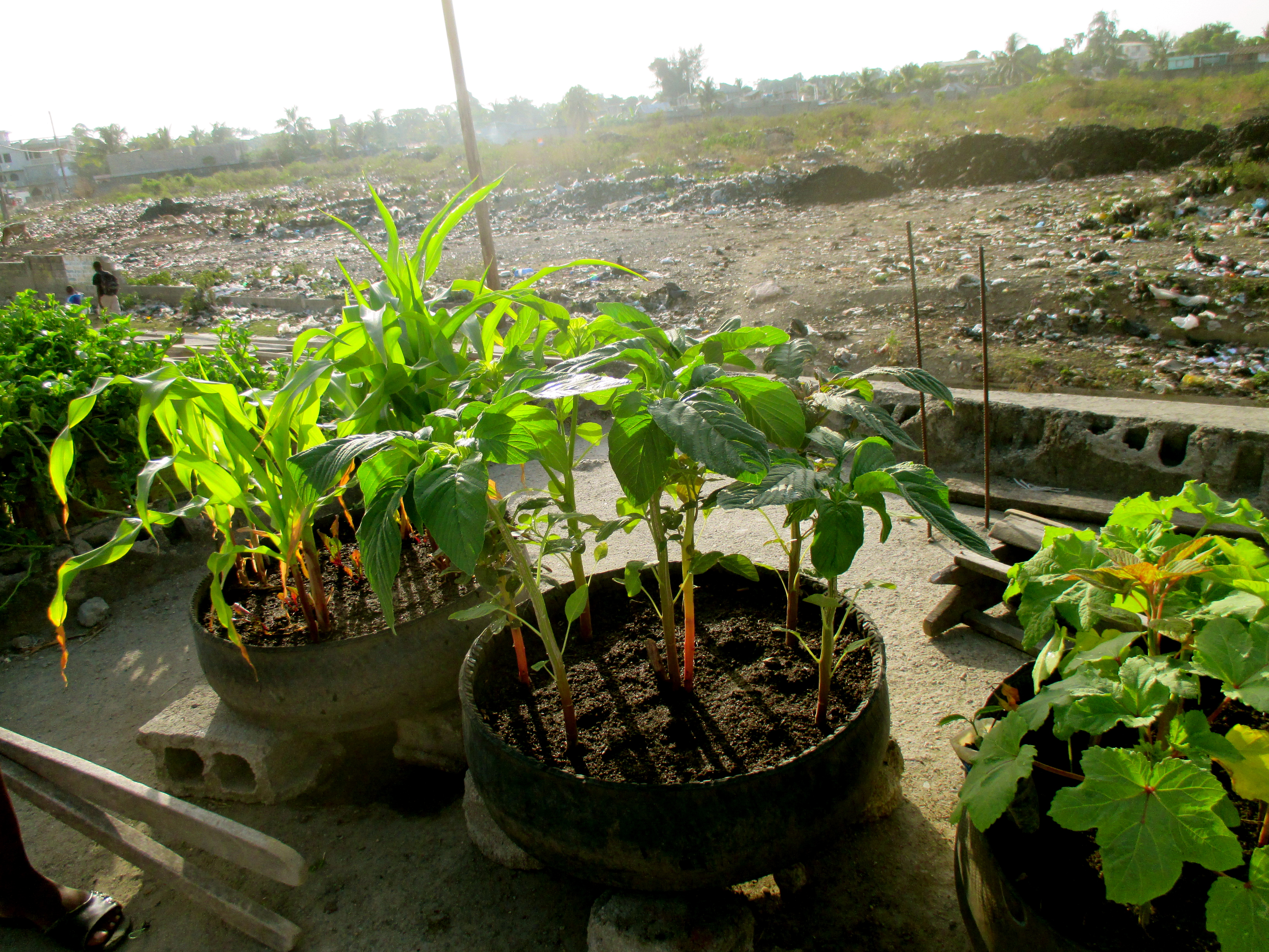 view and loamy garden soil be herbs vegetable good all ever start home your selective how own grow gardening best with fruit vegetables to