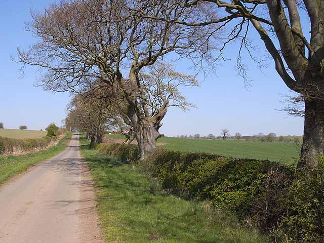 St Oswald's Way approaching Hallington - geograph.org.uk - 1266012