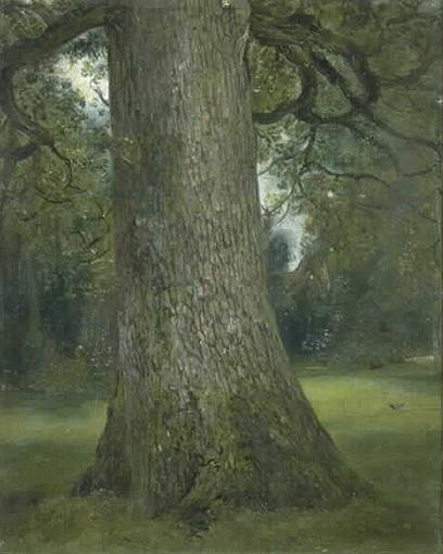 elm tree. Trunk of an Elm Tree 1821