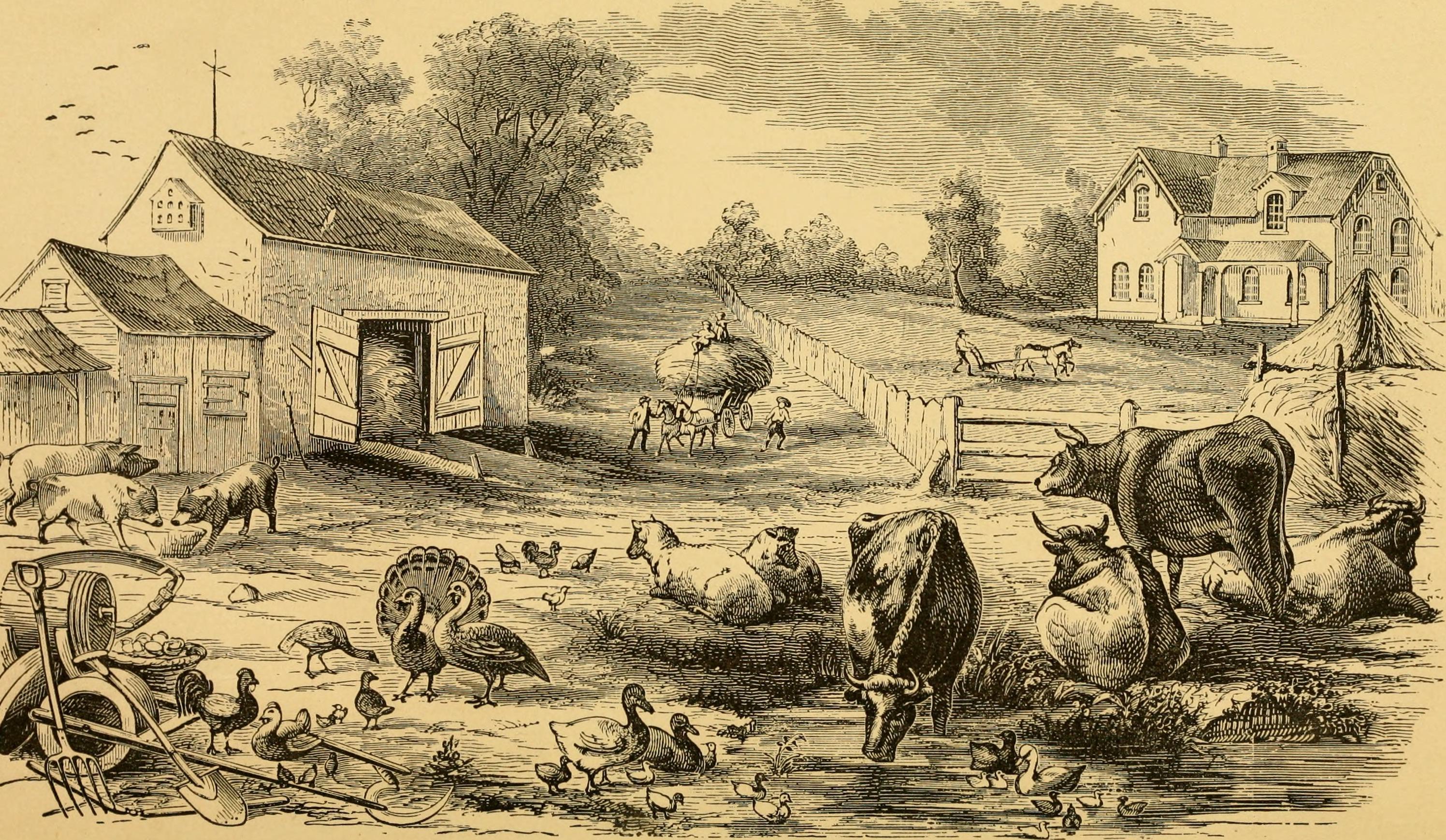 A summary of animal farm