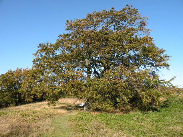 Tree on the line of Fleam Dyke - geograph.org.uk - 1017242