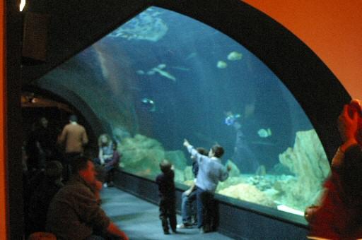 File tunnel aquarium wikimedia commons for Aquarium de paris jardin du trocadero