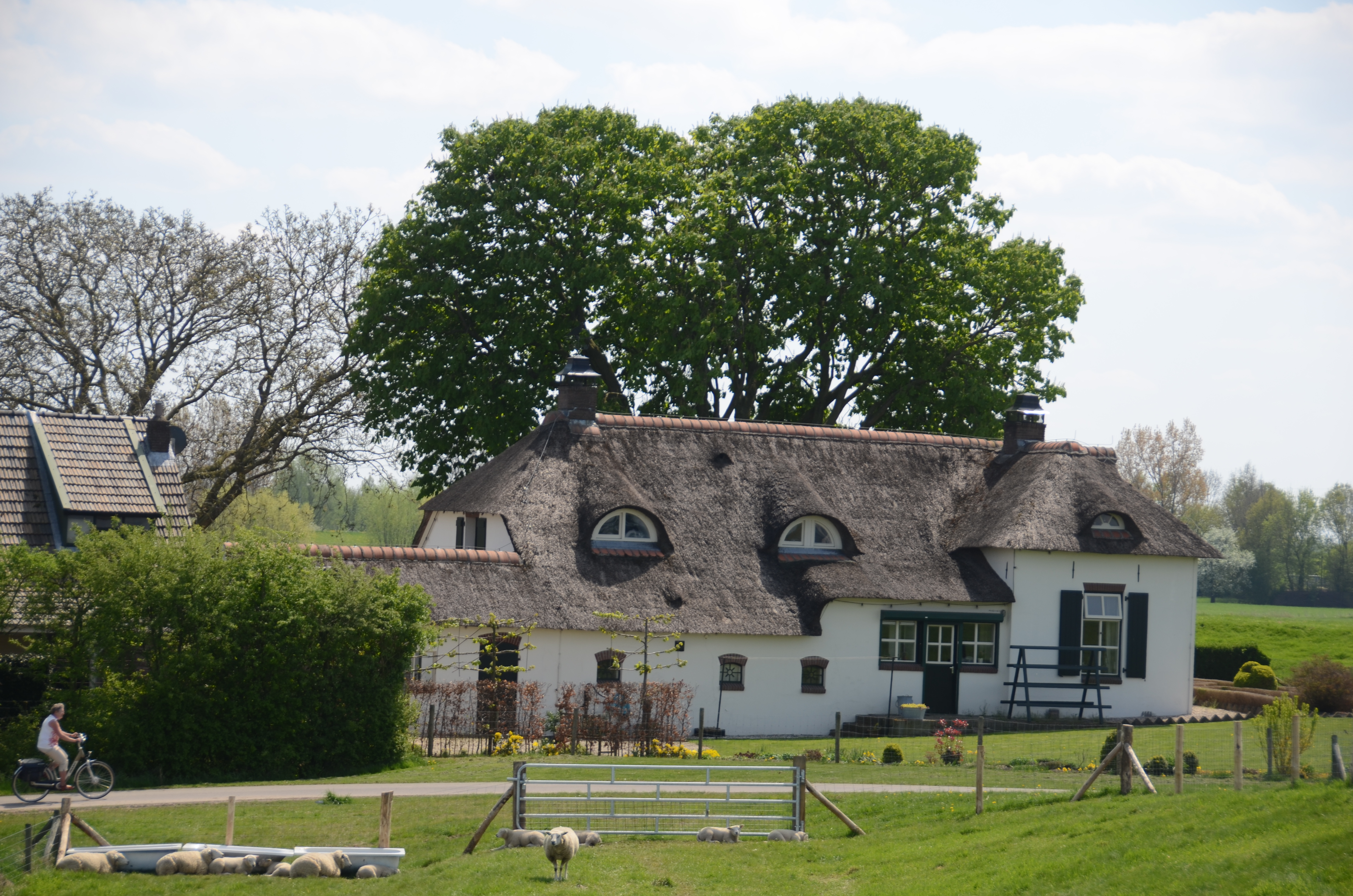 File typical dutch farm along the rhineriver in spring Farm house netherlands
