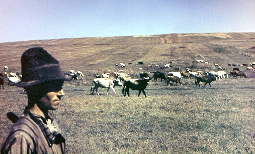 Viehherde Bessarabien