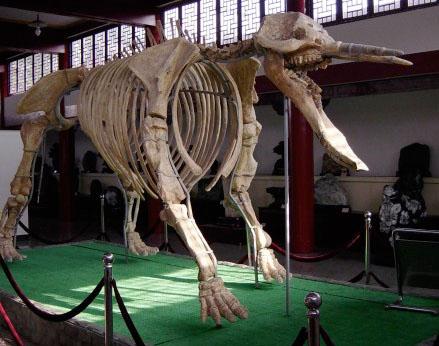 Výsledek obrázku pro platybelodon