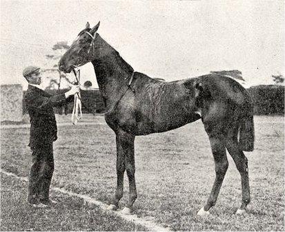 File:Winifreda (horse).jpg