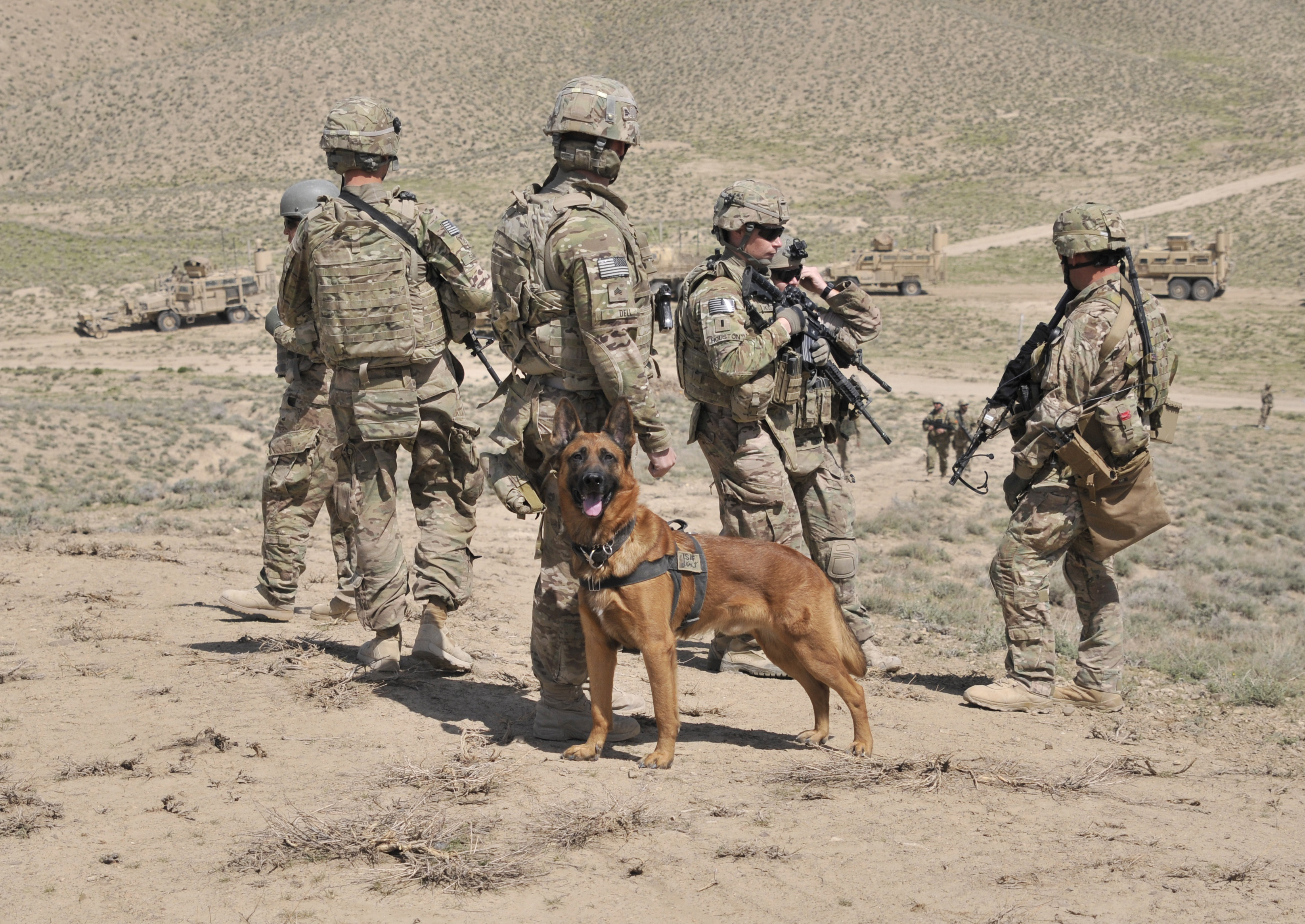 Military working dogs logo - photo#22