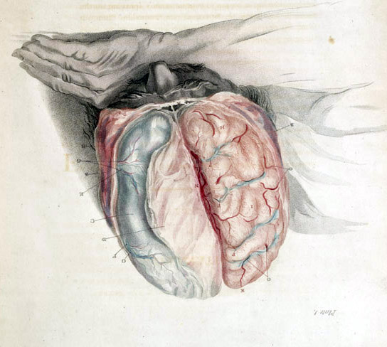 File:Bell brain cut.jpg