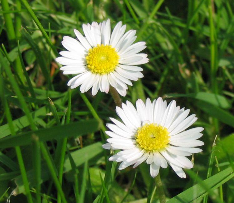namn på blommor i sverige