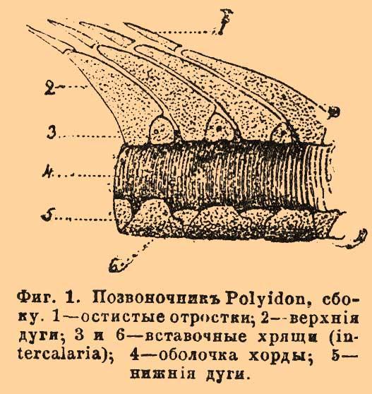 File:Brockhaus and Efron Encyclopedic Dictionary b15 091-0.jpg