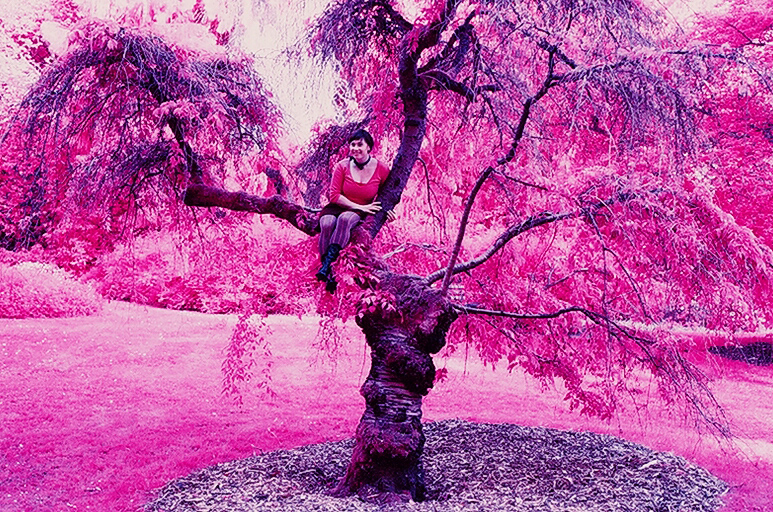 File Color Infrared Sfoseayyz Tree Jpg Wikipedia Color Trees