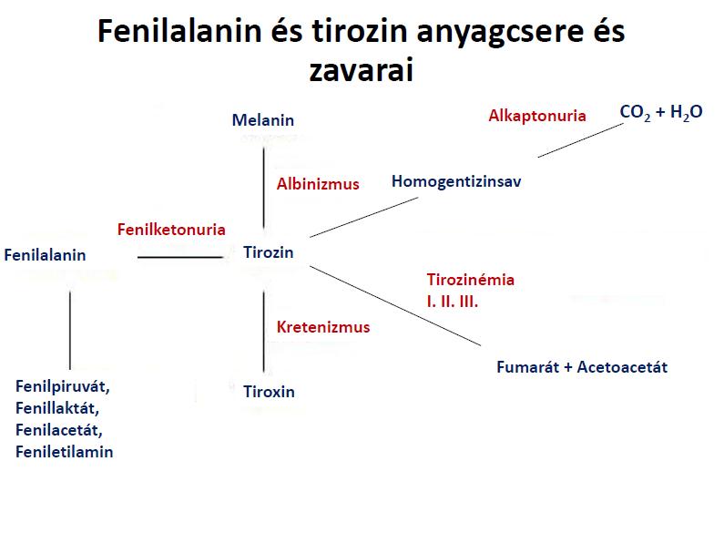 File:Fenilalanin és tirozin anyagcsere és zavarai.png