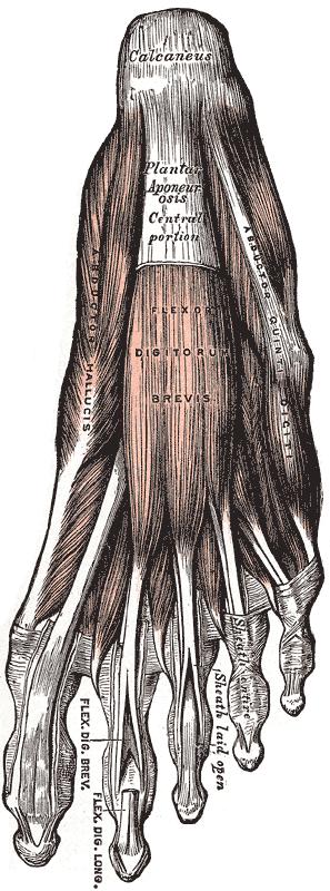 Plantar Fasciitis How I Beat My Long Term Battle With Heel Pain