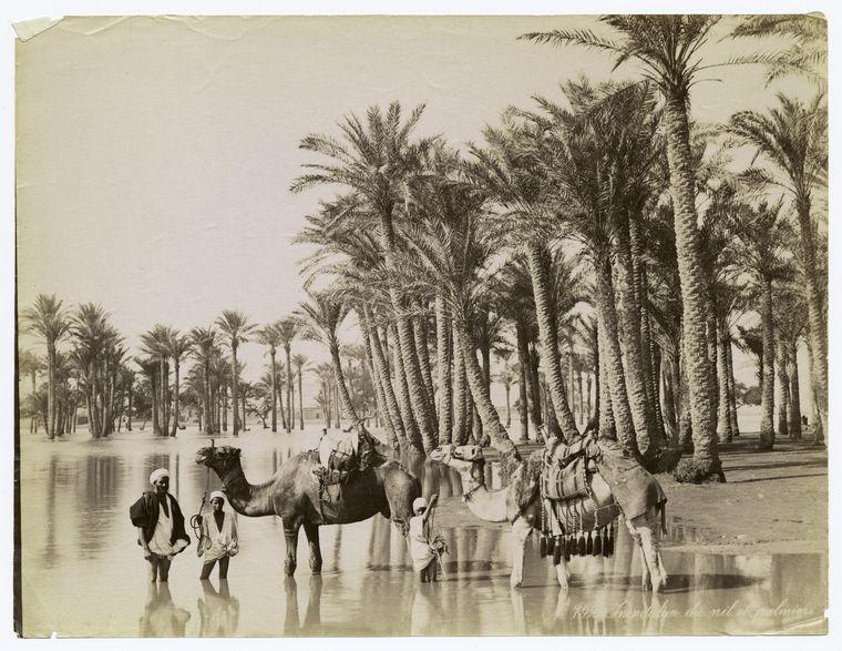 Inundation_du_Nil_et_palmiers..jpg