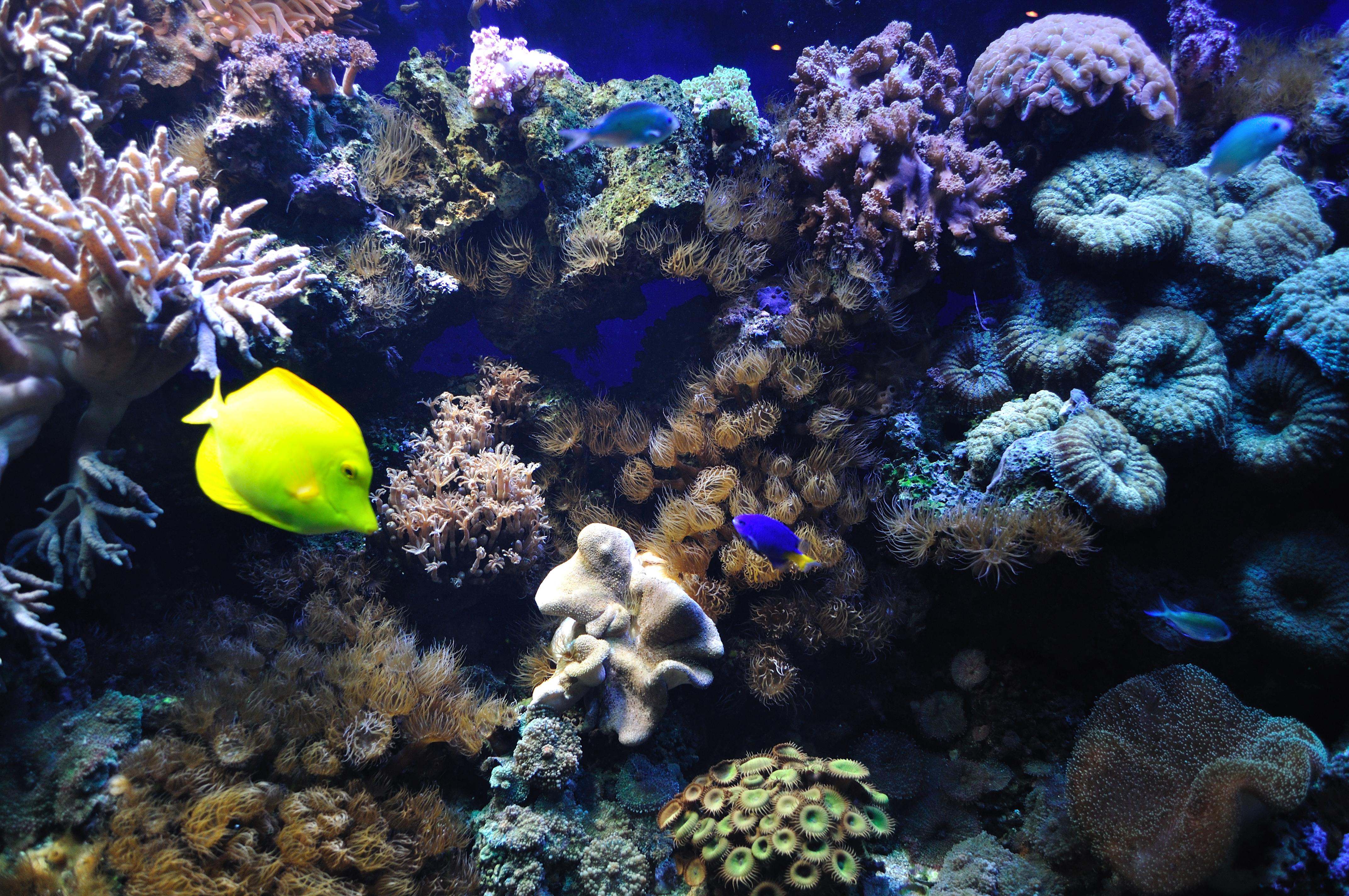 File:Marine fish (5791783978).jpg - Wikimedia Commons