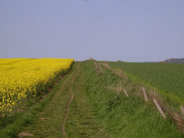 "Near the start of the ""Tabular Hills Walk"" - geograph.org.uk - 221352"