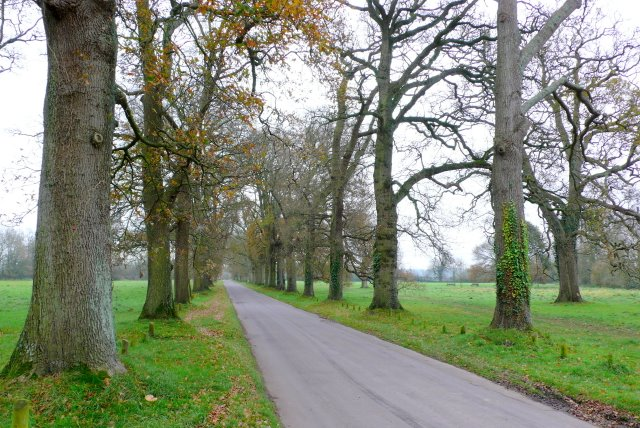 Pamphill Green, Dorset - geograph.org.uk - 1061077