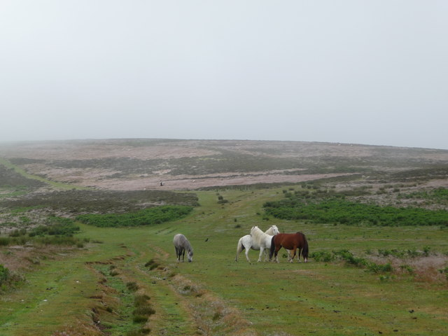 Ponies on the Long Mynd - geograph.org.uk - 1399215