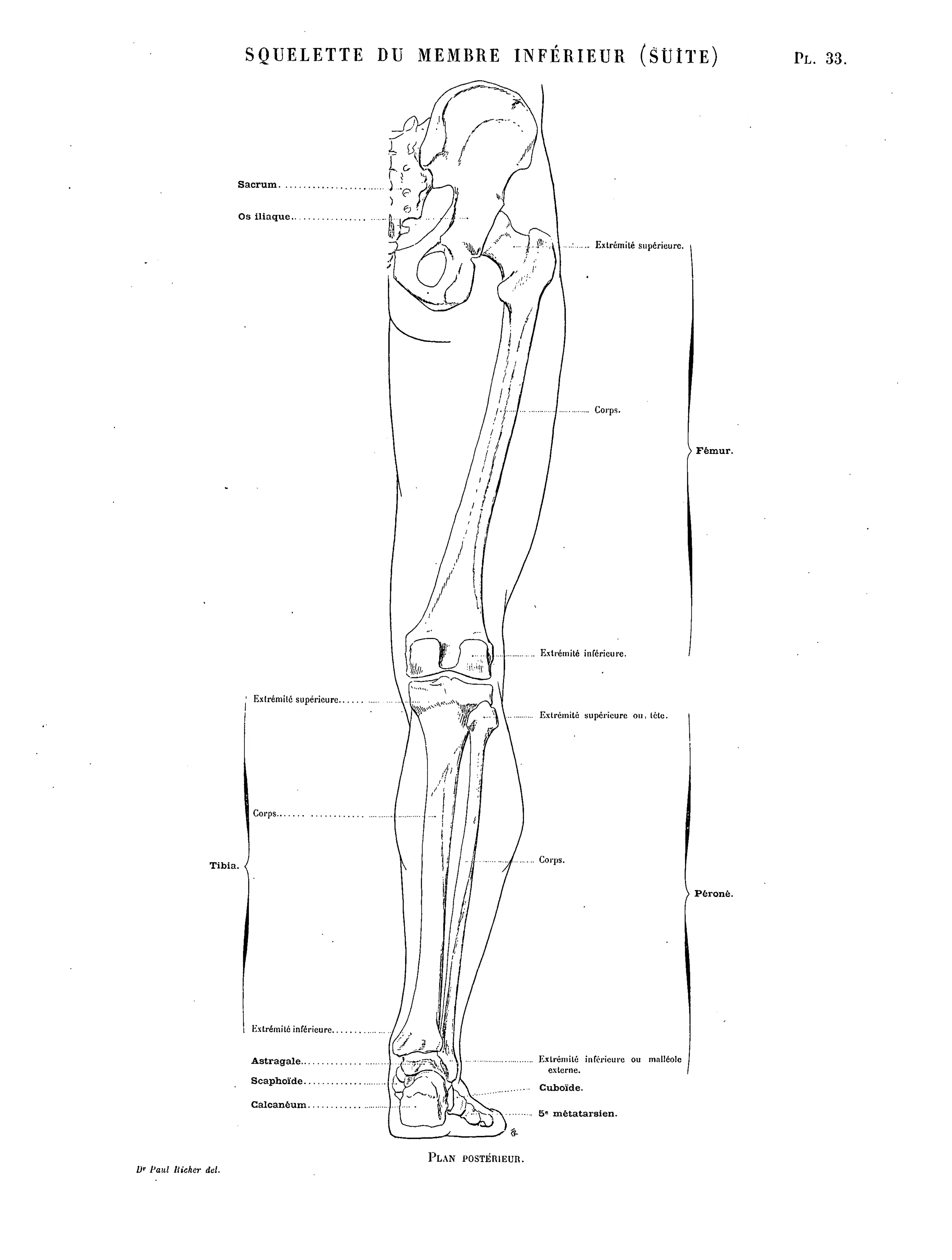 Gemütlich Menschlicher Unterarm Anatomie Zeitgenössisch ...