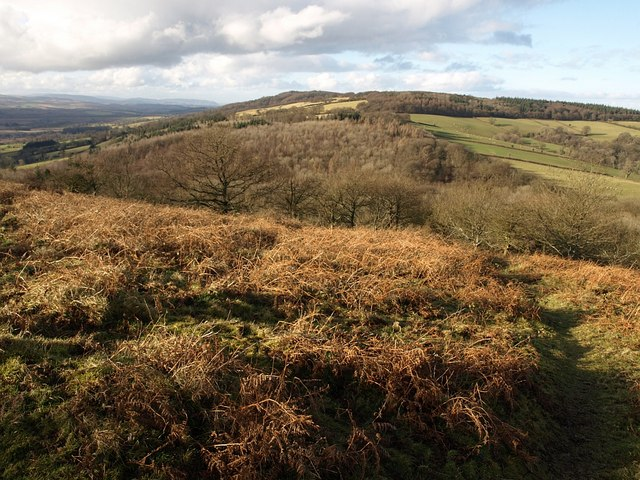 Slopes of Cothelstone Hill - geograph.org.uk - 1140153