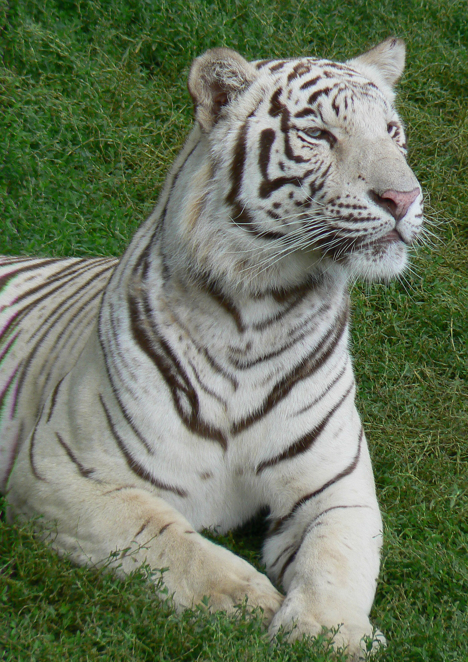 hot pics of animal tiger photos