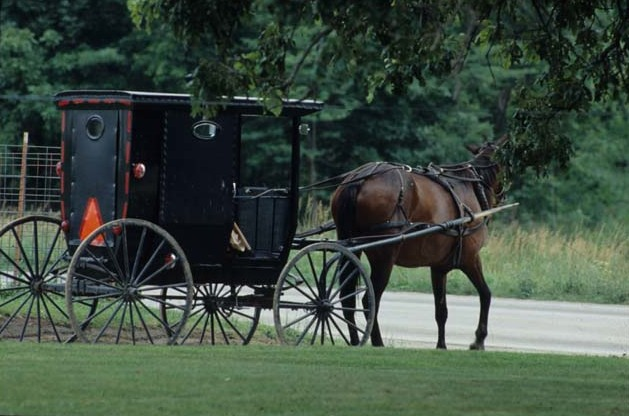 File:Amish horse and buggy (MSA) (5789077730).jpg
