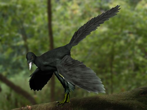 Archaeopteryx lithographica, un ave del Jurásico. - Dinosauria