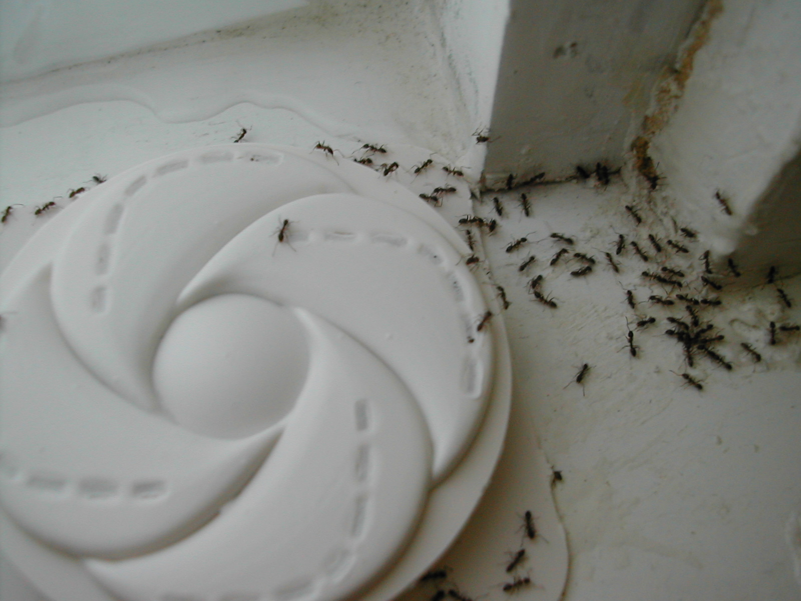 This Easy Trick Gets Rid Of Sugar Ants Fast