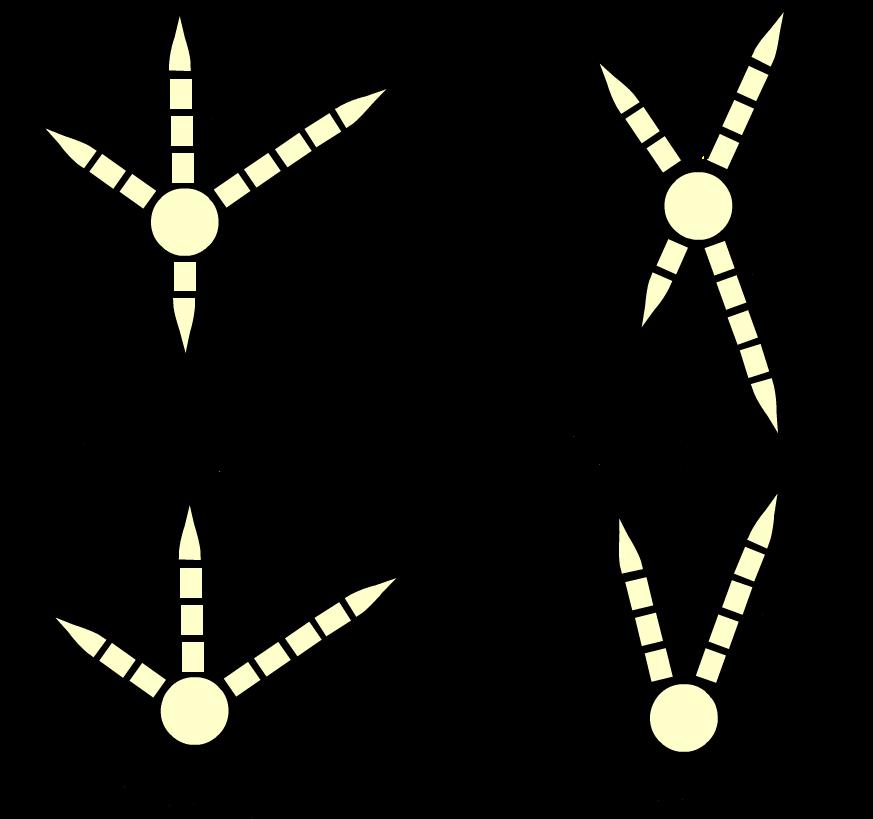Types of bird feet