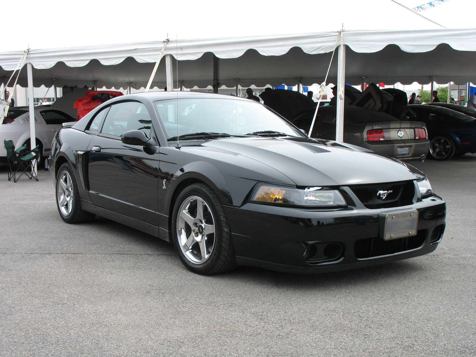 Fileblack 2003 2004 ford mustang iv svt cobra jpg