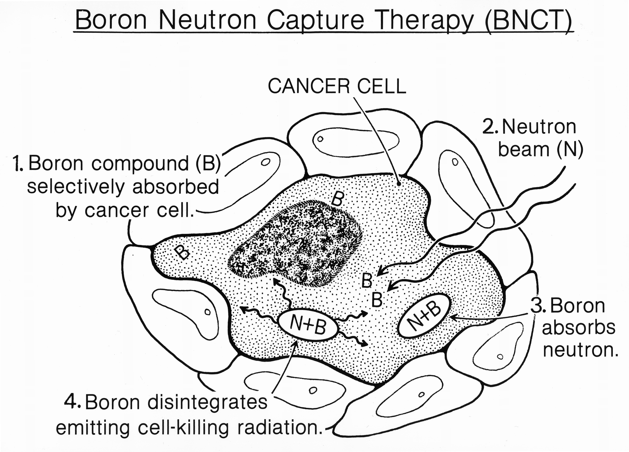 Neutron capture