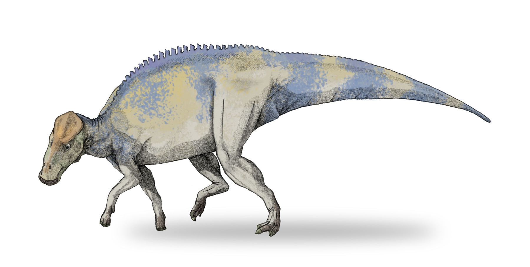 brachylophosaurus - photo #3