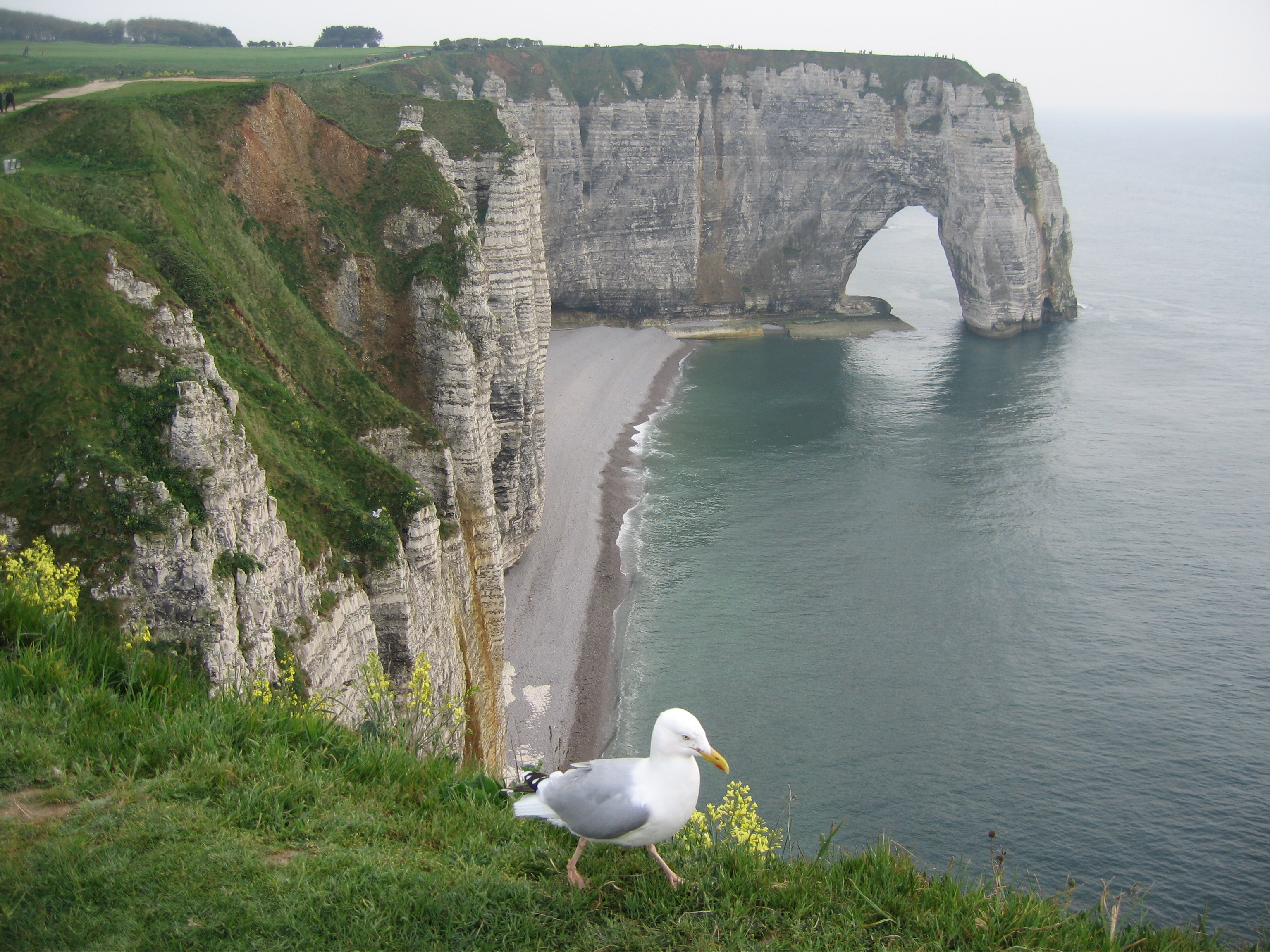 File Cliffs Of Etretat Normandy May 2006 Jpg Wikipedia