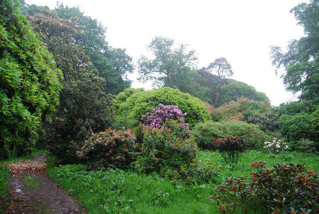 Colour in the grounds of Muncaster Castle - geograph.org.uk - 1335653